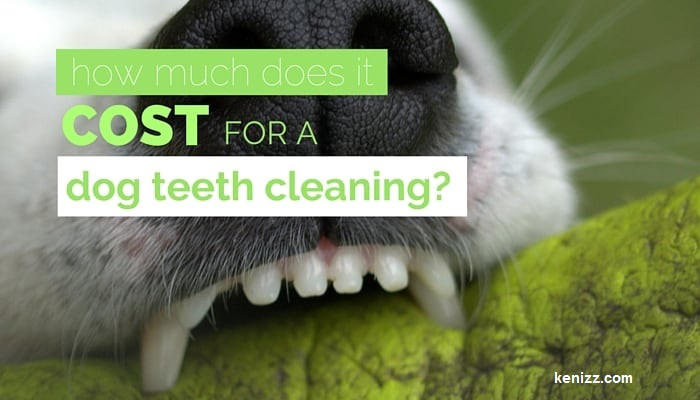 Read more about the article HOW MUCH DOES DOG DENTAL CLEANING COST?