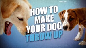 Read more about the article how to make my dog vomit