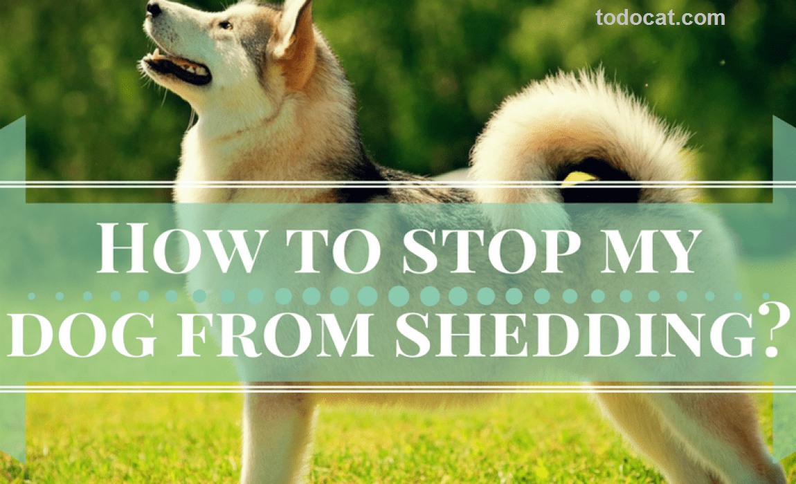 Read more about the article How to stop a dog from shedding