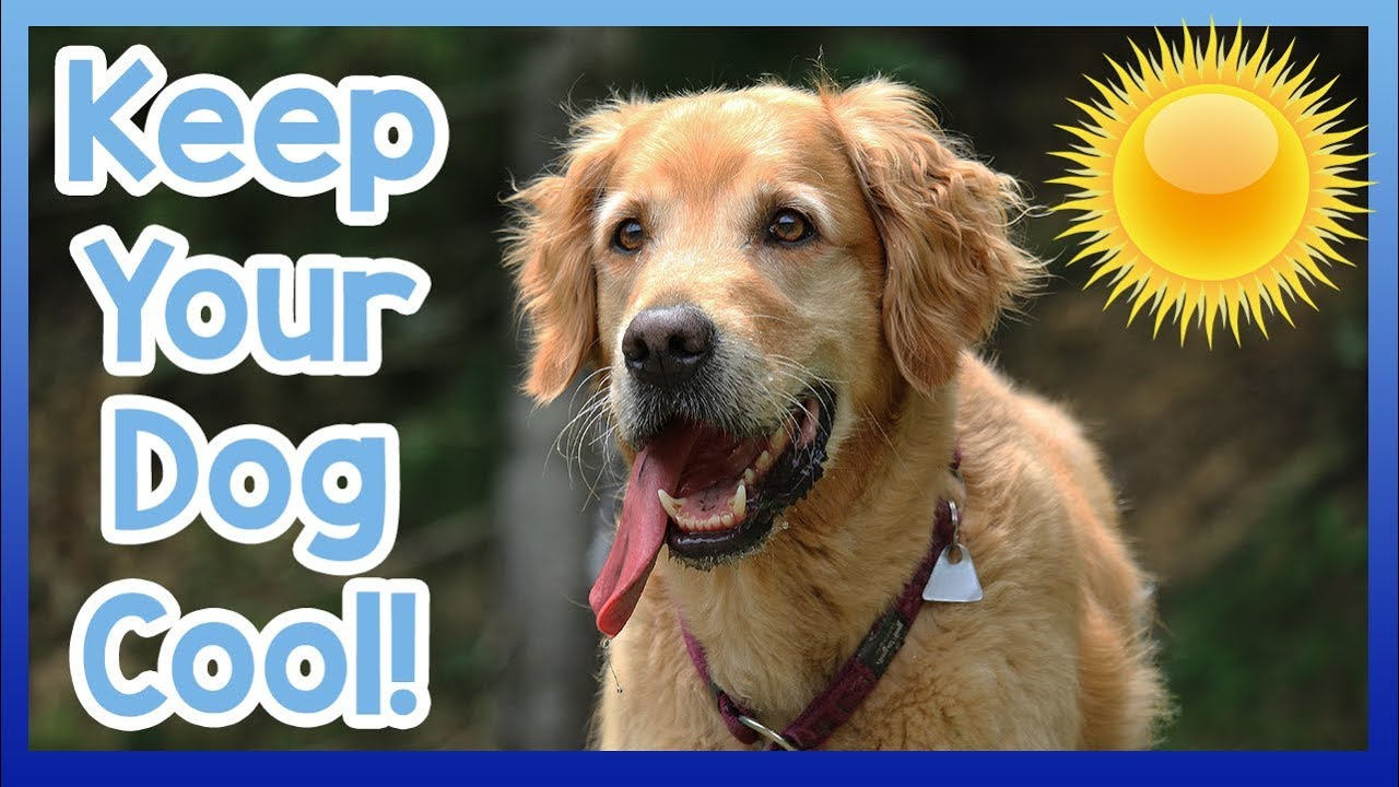 Read more about the article How to cool down a dog in hot season