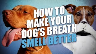 Read more about the article how to freshen dog's breath