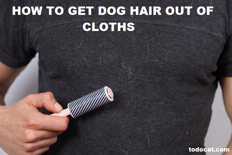Read more about the article how to get dog hair out of cloths