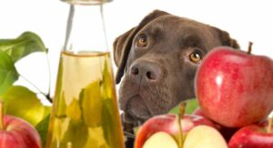 Read more about the article Apple cider vinegar for dogs