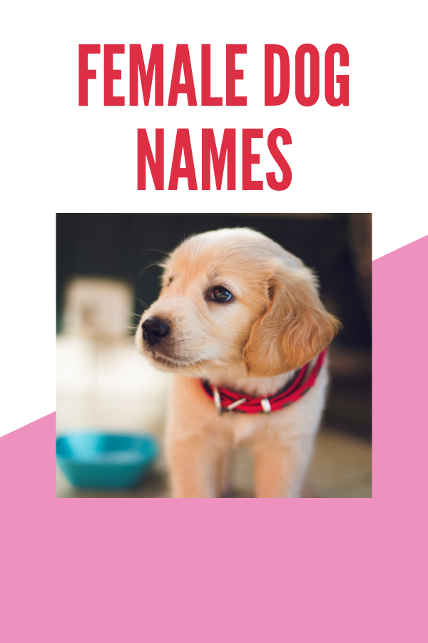 You are currently viewing Female dog names: Top cute names