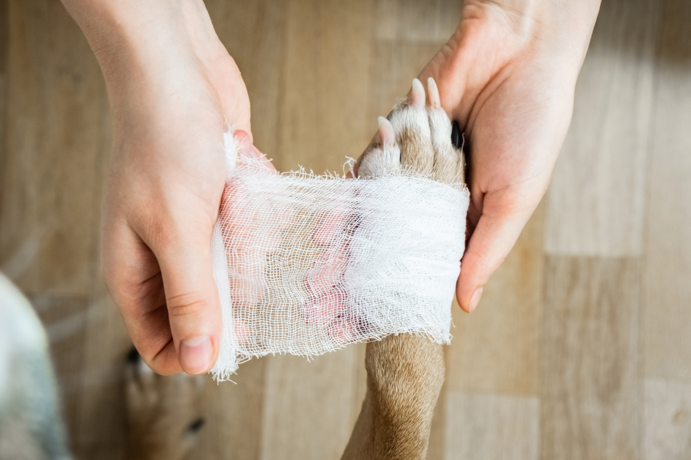 Clean a dog's wound: rap bandage   todocat
