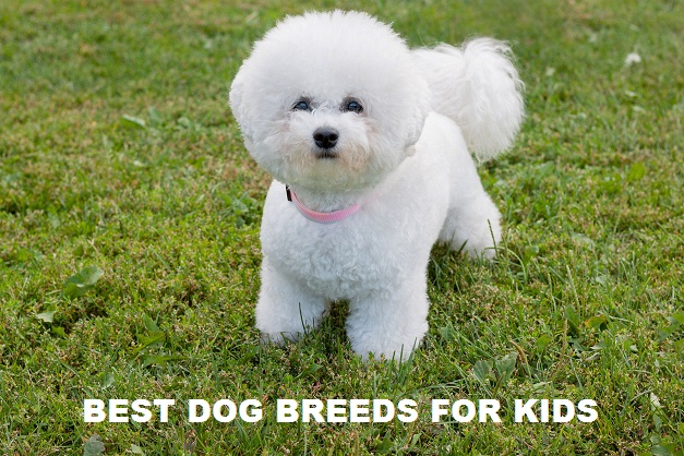 You are currently viewing Best Dog breeds for kids