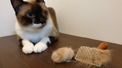 How to make a cat throw up: Hairballs   todocat.com