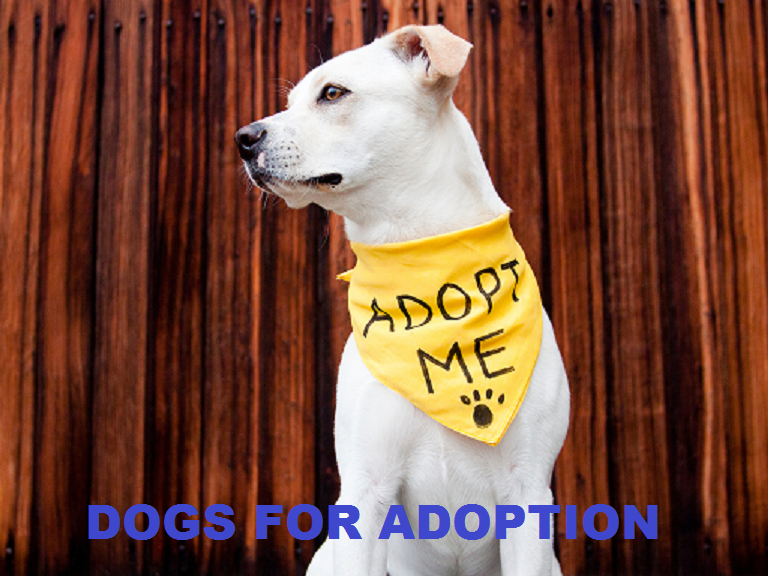dogs for adoption| todocat