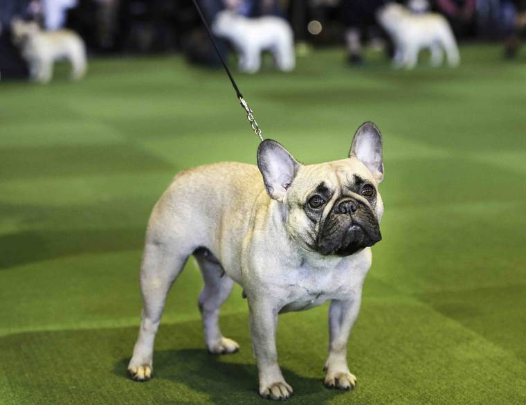 Rench Bulldogs: Best dog breeds for kids | todocat.com