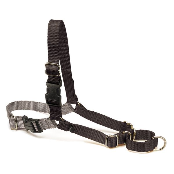 choose the right harness for your Pet: easy walk by premier | todocat.com
