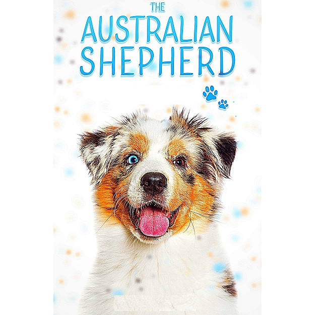 Read more about the article Australian Shepherd: Everything you need to know