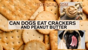 Read more about the article Can dogs eat crackers and peanut butter?