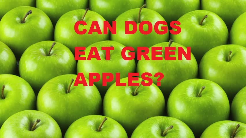 Read more about the article Can dogs eat green apples?