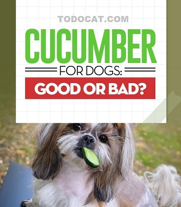 Read more about the article Can dogs eat cucumbers?